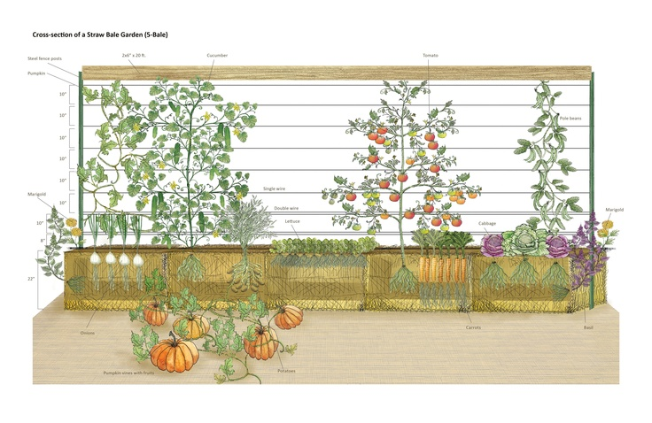 1000 Images About Straw Bale Gardening On Pinterest Gardens Raised Beds And Straws