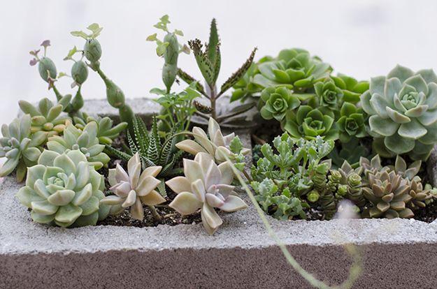 Aprende a realizar macetas con bloques de cemento | La Bioguía