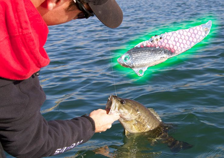 Best 20 fishing for bass ideas on pinterest bass for Winter bass fishing