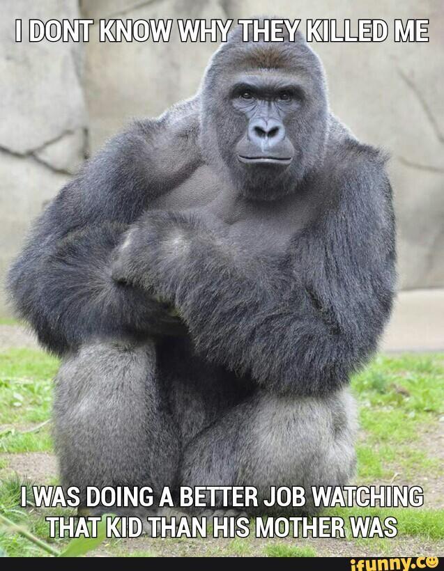aa26c7f4fdf331d460c74cb0297f1269 harambe meme bae meme 36 best harambe images on pinterest dankest memes, the gorilla and