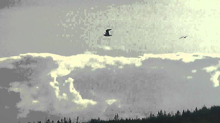 Seagulls Circling