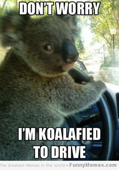shocked-koala-meme