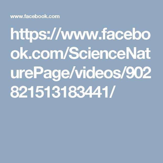 https://www.facebook.com/ScienceNaturePage/videos/902821513183441/
