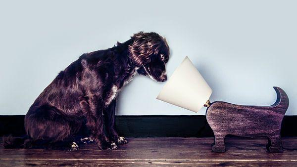 Dubová Dog lamp neboli Psí lampa je inspirována teriéry.