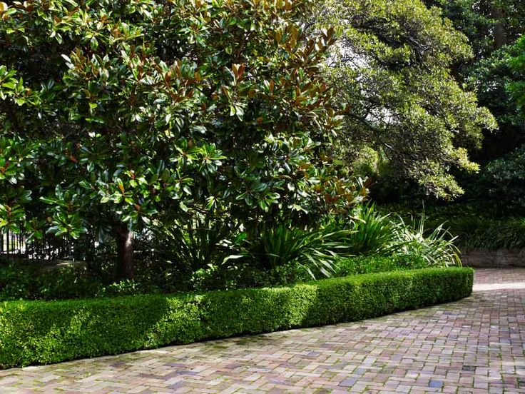 Recycled brick driveway & Buxus sp. border