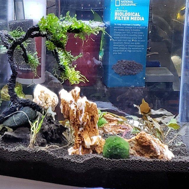 Aqua Bonsai Abc Aquatic Live Trees 4 Aqua Bonsai Combination For Aquariums In 2020 Live Tree Bonsai Aquarium