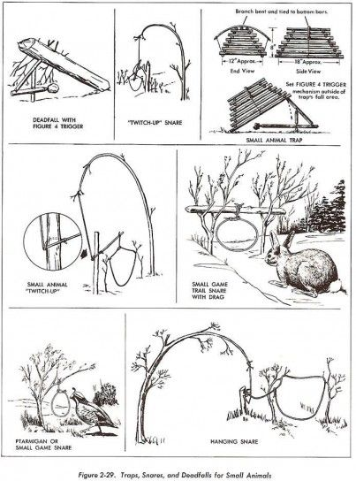 How to Build a Survival Snare Trap - Survival First