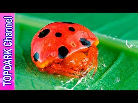 10 Insectos  Increibles que Imitan el Aspecto de otros Animales
