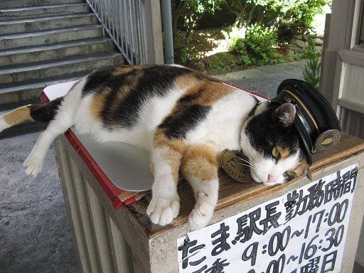 """たま駅長がいる駅は和歌山県の貴志駅です。 猫の駅長""""たま""""と部下の""""ニタマ""""や、「いちご」「おもちゃ」「たま」をモチーフにしたキュートな電車が走る話題のローカル線。 このラッピング電車がまたかわいいですよ♪ 世界で唯一、檜皮葺きの駅舎の貴志駅では地元の果物を使ったジュースやジェラートが味わえます! この季節はたま駅長に癒やされて美味しいジェラートを食べにぜひ和歌山へお越しくださいませ!たま駅長は毎週火・水・木・金曜日に出勤です。 土・日曜日と祝日の月曜日は ニタマ駅長が貴志駅にて駅長代行を勤めます。"""