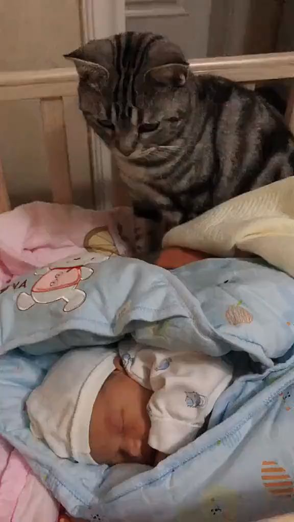 How wonderful it is for a child to grow up with a cat ❤️