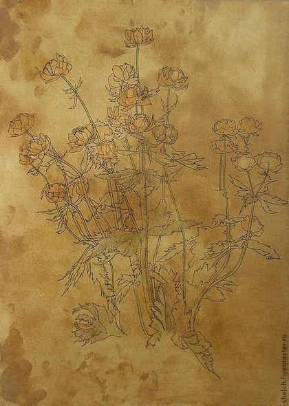 Троллиусы. Картины цветов графика серия картин старинный стиль старение ретро цветы картины цветов акварельная тонировка графика цветы картина рисунок цветов ретро цветы рисунок графичный цветы