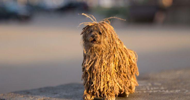 Adorable social media robot dog looks like Zuckerberg's pup, natch http://rite.ly/jdpK