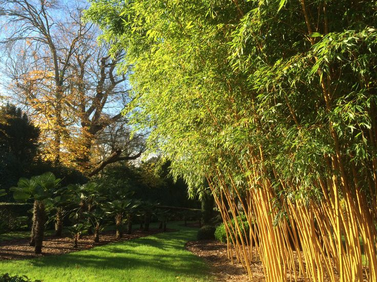 Stunning bamboo in our garden at our old Nursery. Our new nursery is at Pulborough
