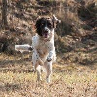 #dogalize Cura del cane da caccia: salute e alimentazione #dogs #cats #pets