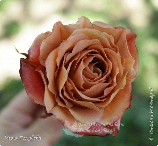 Девочки,сегодня лепила вот такую розу с живого образца и отсняла поностью сборку и тонировку лепестков,чашелистников и стебля.Хотела завтра выложить,но решила сегодня,а то решили малых повести в зоопарк) .И воскресенье буду занята. Так что выкладываю) фото 1