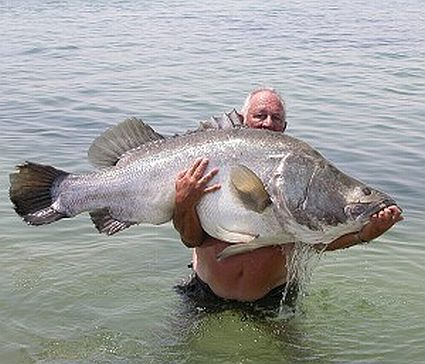 Whoa huge nile perch from lake victoria in africa for Big fish lake