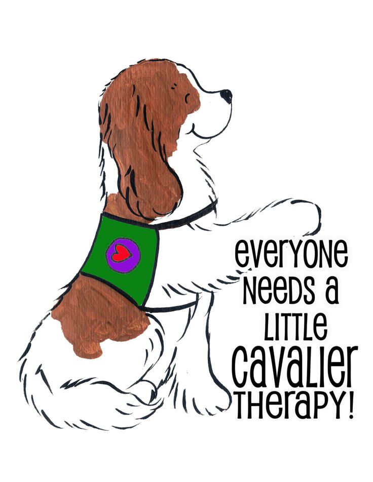 A personal favorite from my Etsy shop https://www.etsy.com/listing/230346114/cavalier-king-charles-spaniel-shirt-you