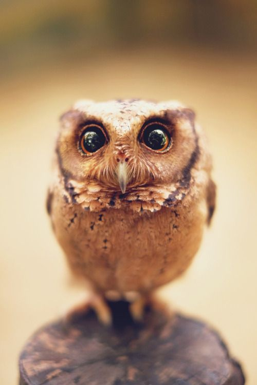 """Mister Owl Hoots! magicalnaturetour: """" I Come from Your Dreams by Sham Jolimie """""""