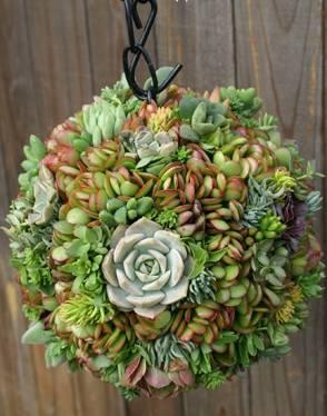 Succulent ball - how to's: http://www.apartmenttherapy.com/how-to-make-a-s-1-146583 & http://www.drought-smart-plants.com/succulent-sphere.html#axzz1mbNYusWp