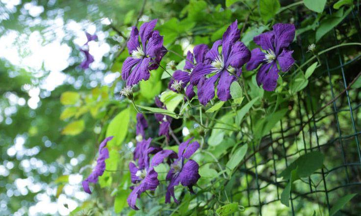 Les 25 meilleures id es de la cat gorie support plante grimpante sur pinterest treillis de - Faire peur aux oiseaux jardin ...