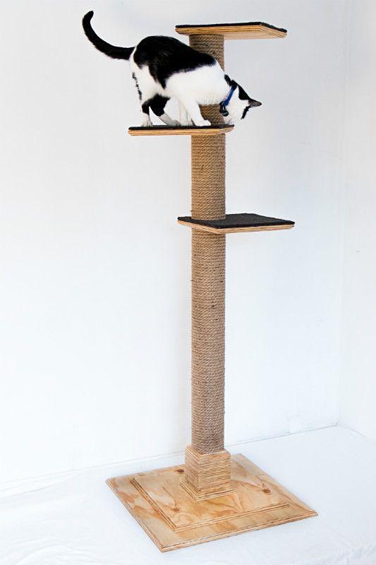 - Cat Climbing Posts