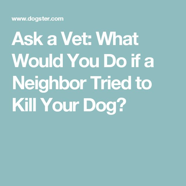 Ask a Vet: What Would You Do if a Neighbor Tried to Kill Your Dog?