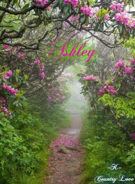 10 best my name ashley images on Pinterest   Names, Butterflies and ...