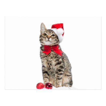 Christmas cat - santa claus cat - cute kitten postcard - merry christmas postcards postal family xmas card holidays diy personalize