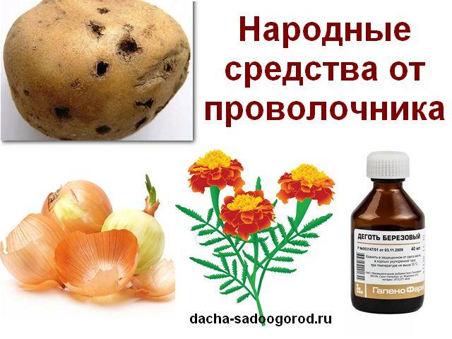 как избавиться от проволочника на картофельном поле