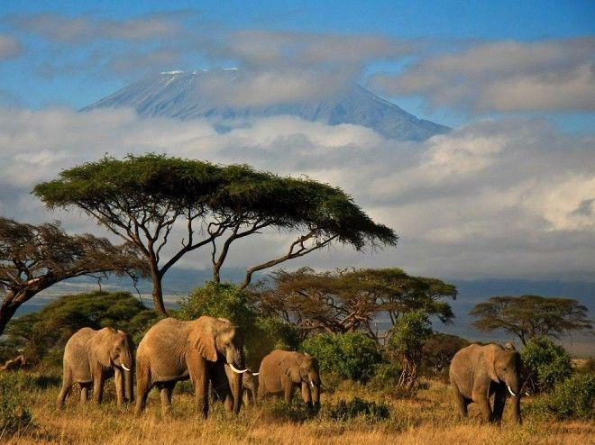 Amboseli National Park, Kenya   1,000,000 Places
