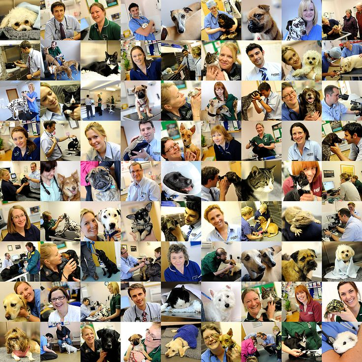 81 images on a corporate collage from a veterinary clinic - staff members, clients' pets and consultation rooms all in one neat space