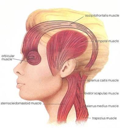 Chris McNeil Chiropractor Muscle Tension Headahce Releif