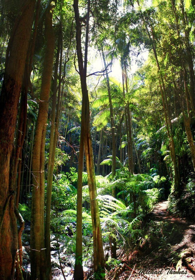 Tamborine Mountain, QLD Australia