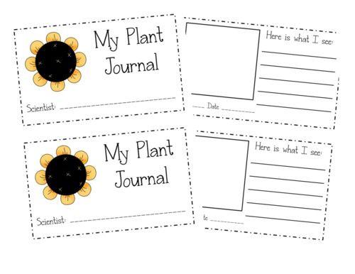 71 best Kindergarten - Plants images on Pinterest   Classroom ...