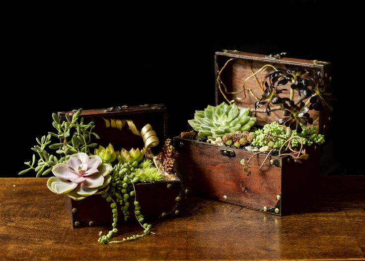 6 Tips for Stunning Succulent Containers
