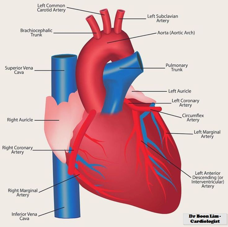 Pin by Cardiologist on Health is wealth | Cardiologist ...