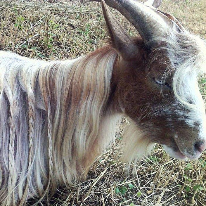 A Guardia Piemontese in Calabria ogni animale ha un nome