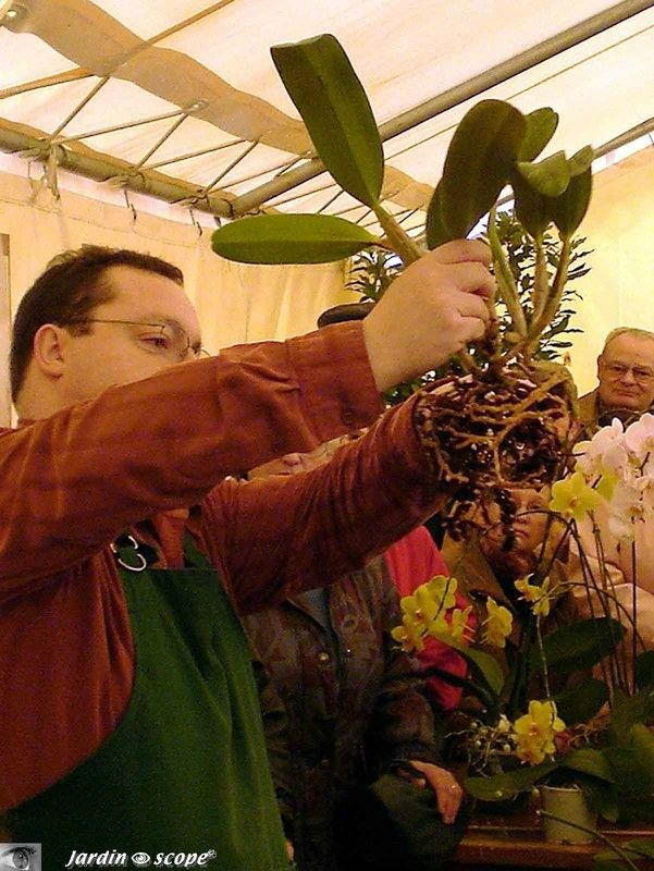 Atelier de conseils de culture, refloraison et rempotage des Orchidées...