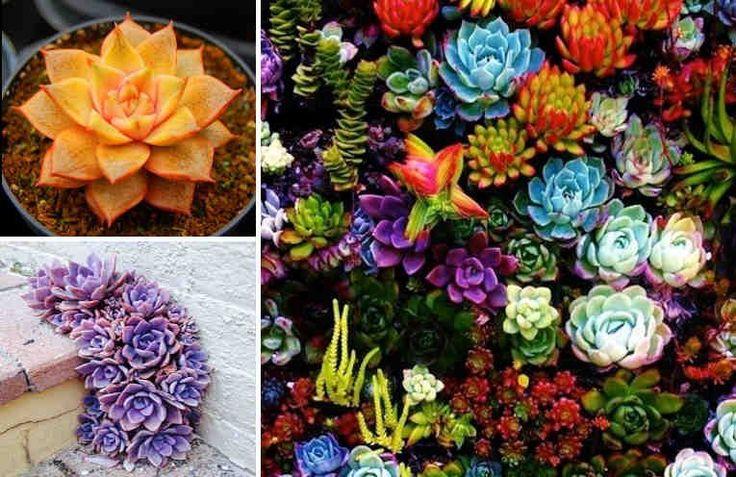 Todos sabemos que las plantas absorben el agua a través de sus raíces. Esto no solo influye en su salud y en su crecimiento, ¡sino también en su color! Y eso es genial!! Podemos tener plantas de diferentes colores. Todo lo que necesitas es un poco de colorante para comida!! Mezcla una cucha