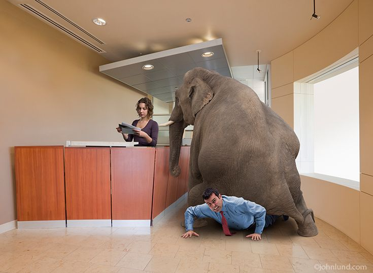 elephant sitting on a businessman in the reception room