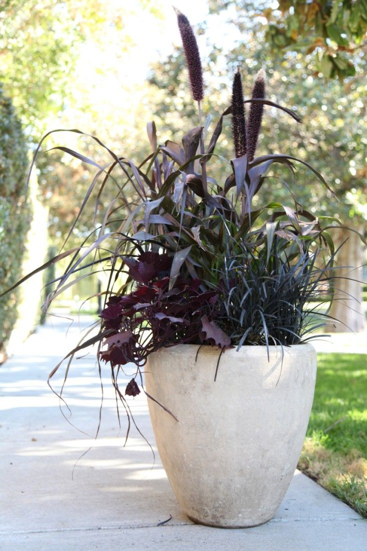 Gardenista This all-foliage combo with purple millet, black mondo grass, and sweet potato vine was inspired by one that Gardenista editor Erin Boyle spotted in her Brooklyn neighborhood. Its dark hues have the perfect dose of spookiness.