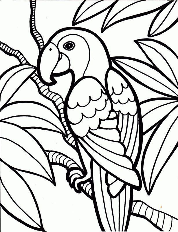 Medium Coloring Pages Animals Coloring Jungle Coloring Pages Bird Coloring Pages Easy Coloring Pages