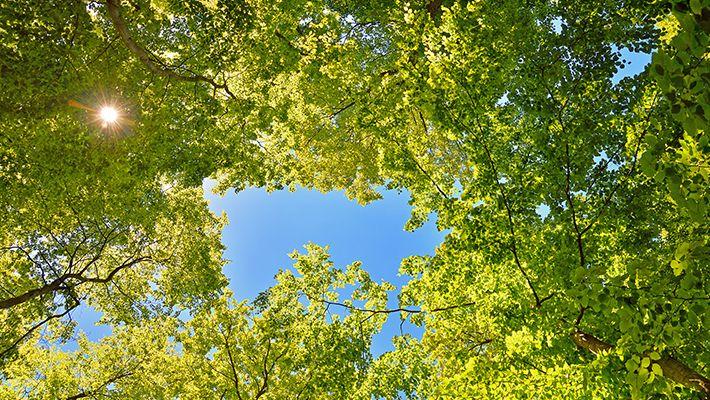 Hva kan jeg gjøre med naboens trær og hekker - foto iStock
