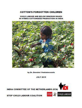 2015 Rapport Cotton's Forgotten Children - Bijna een half miljoen Indiase kinderen – waaronder 200.000 jonger dan 14 jaar – werken in de katoenzaadteelt.