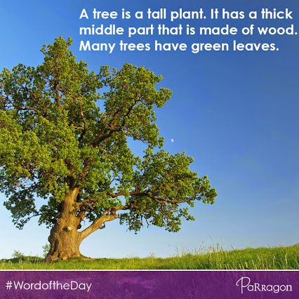 #WordOfTheDay: Tree. A tree is a tall plant. It has a thick  middle part that is made of wood.  Many trees have green leaves.