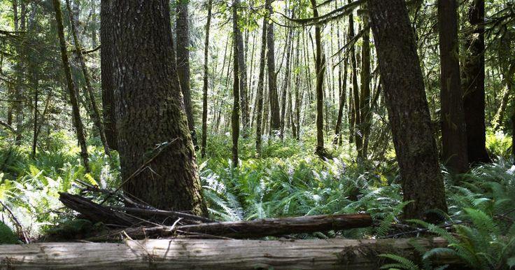 Árvores das florestas tropicais africanas. As florestas tropicais africanas são as segundas maiores do mundo, logo após as da Amazônia, cobrindo aproximadamente 20% da África, com maior concentração na África Central. As florestas tropicais da África Oriental não são tão densas quanto as da África Central. Elas possuem uma biodiversidade considerável, o que inclui as árvores que as compõem.