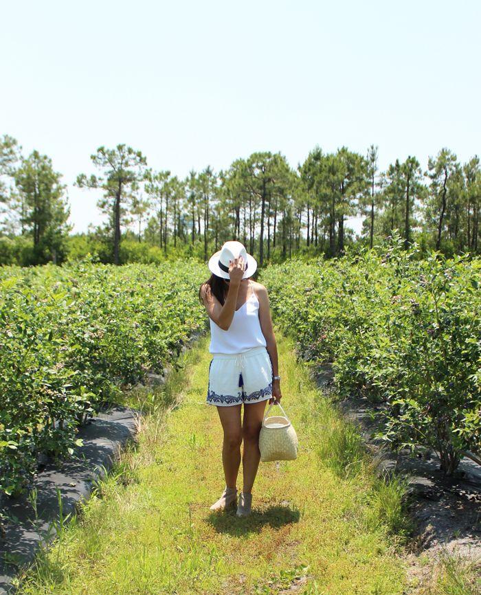 A Dose of Pretty ~ Blueberry Farm