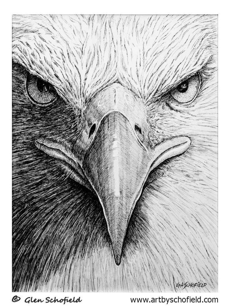 #025 Bald-Eagle - 18 X 24 <---- www.artbyschofield.com #animal #art #artoftheday #baldeagle #creative #drawing #fineart #glenschofield #icon #iconic #icons #illustra #illustration #ink #myart #onlineart #onlineartgallery #onlineartsales #paint #painting #paintings #penandink #pens #picture #portraits #portraiture