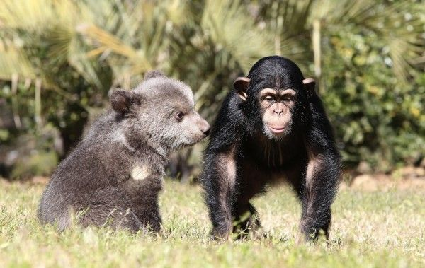 bear_chimp_baby_friends_06