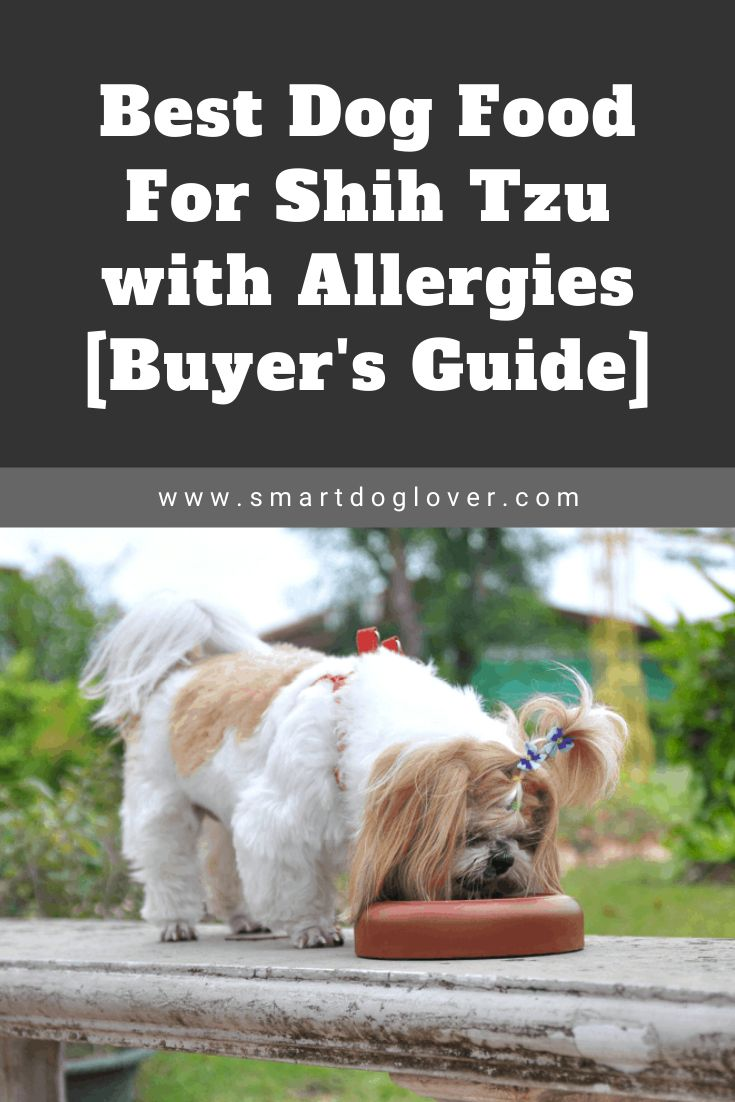Best dog food for shih tzu with allergies buyers guide